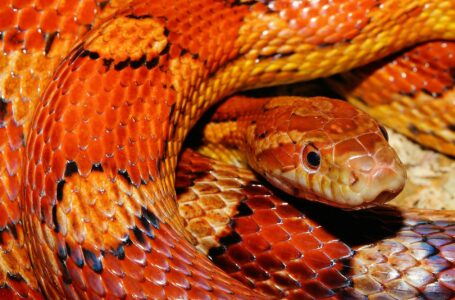 Popular myths about snakes which are not true